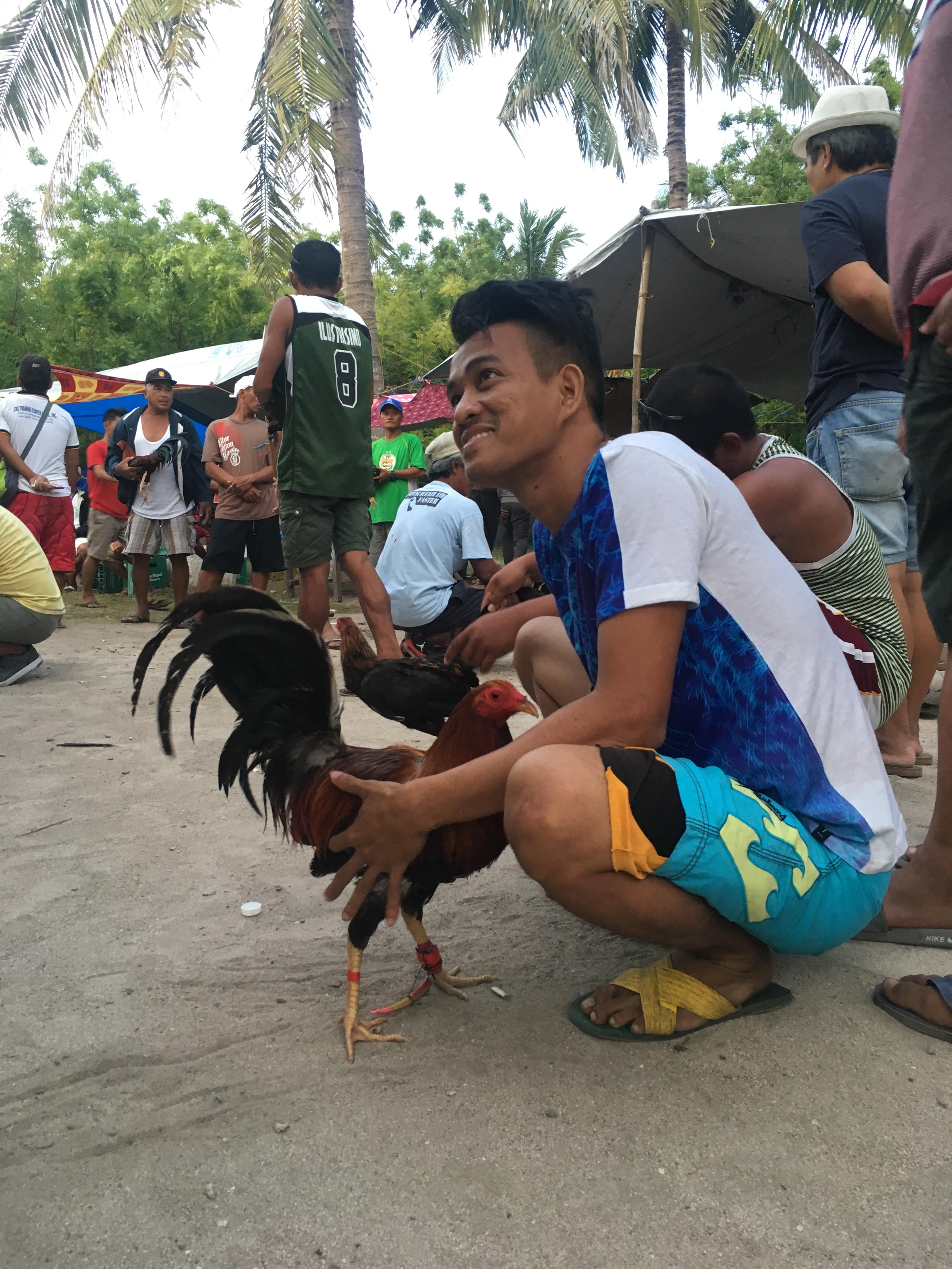 walki kogutów filipiny